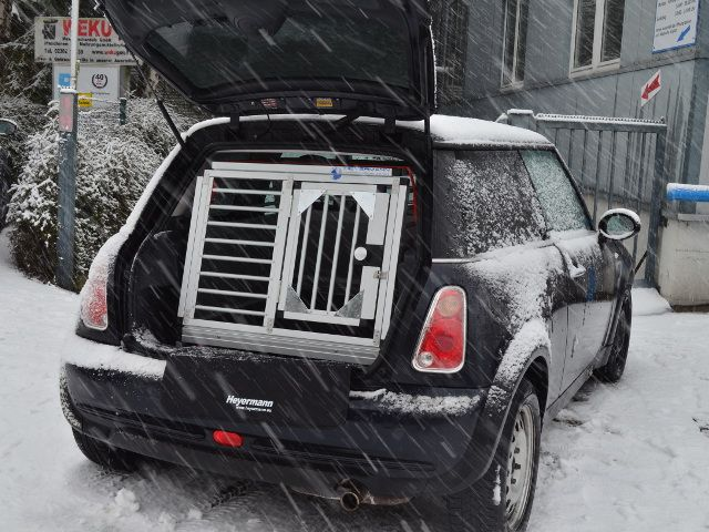 Kellypriceandcompanyinfo Mini Cooper Kofferraum Hund