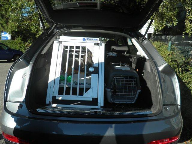 Zelt Für Audi Q5 : Individuelle hundetransportbox einzelbox für audi q