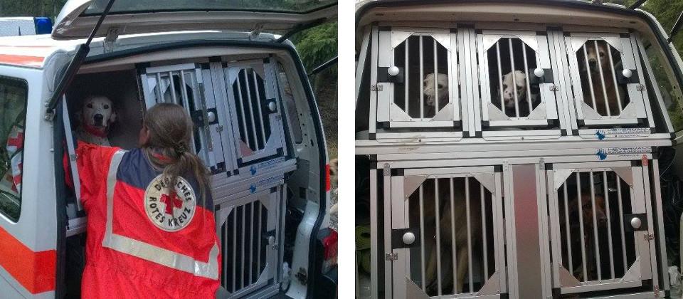 hundebox hundeboxen f r alle hunde und fahrzeuge wie z b audi bmw mercedes. Black Bedroom Furniture Sets. Home Design Ideas